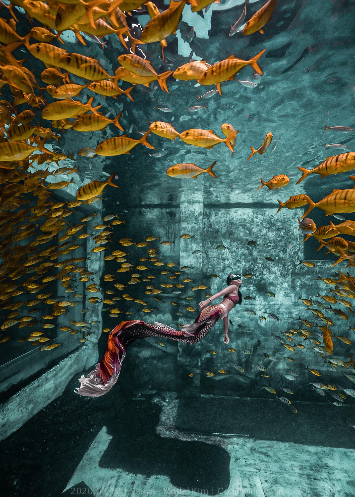 鱼群 潜水