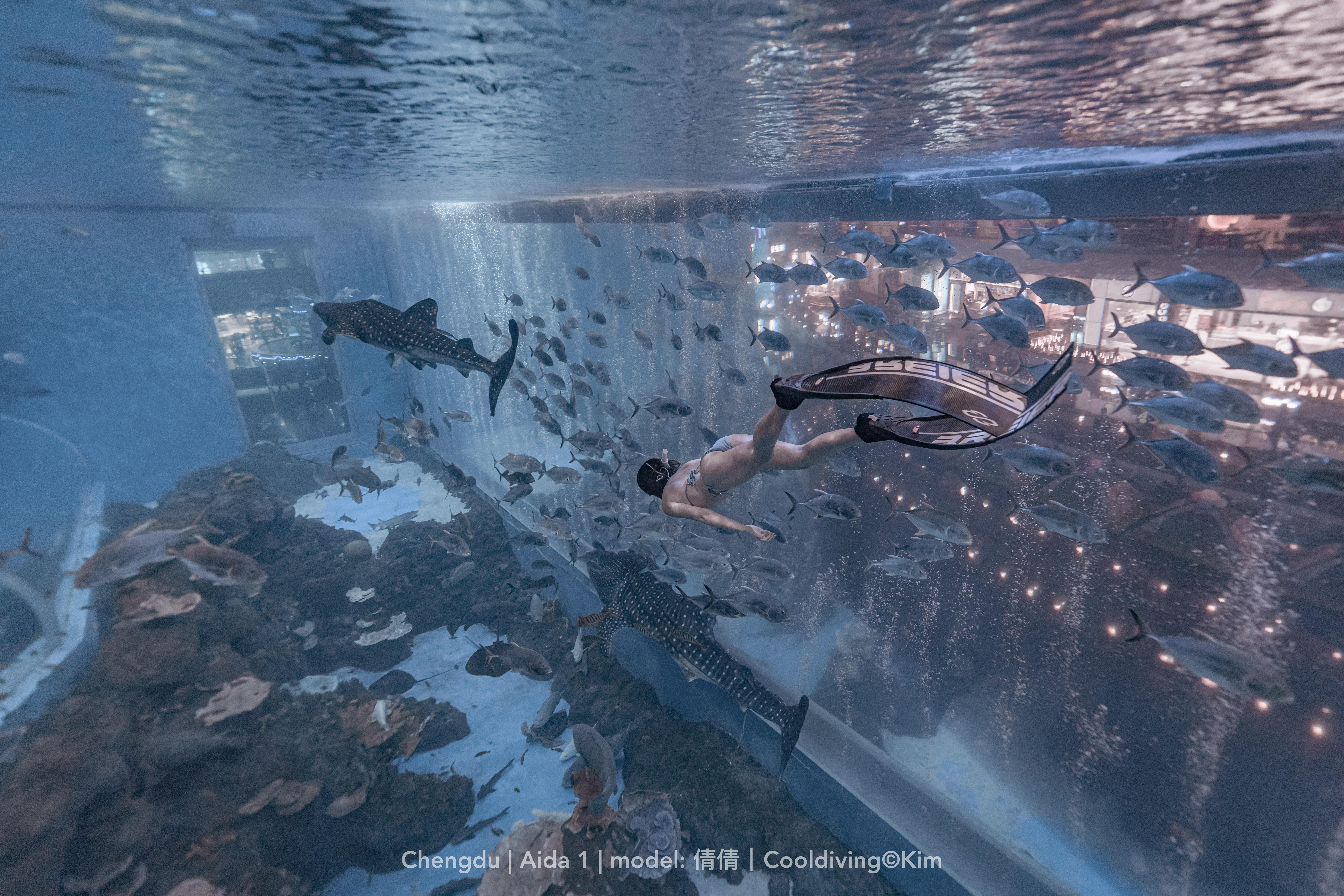 水族馆自由潜