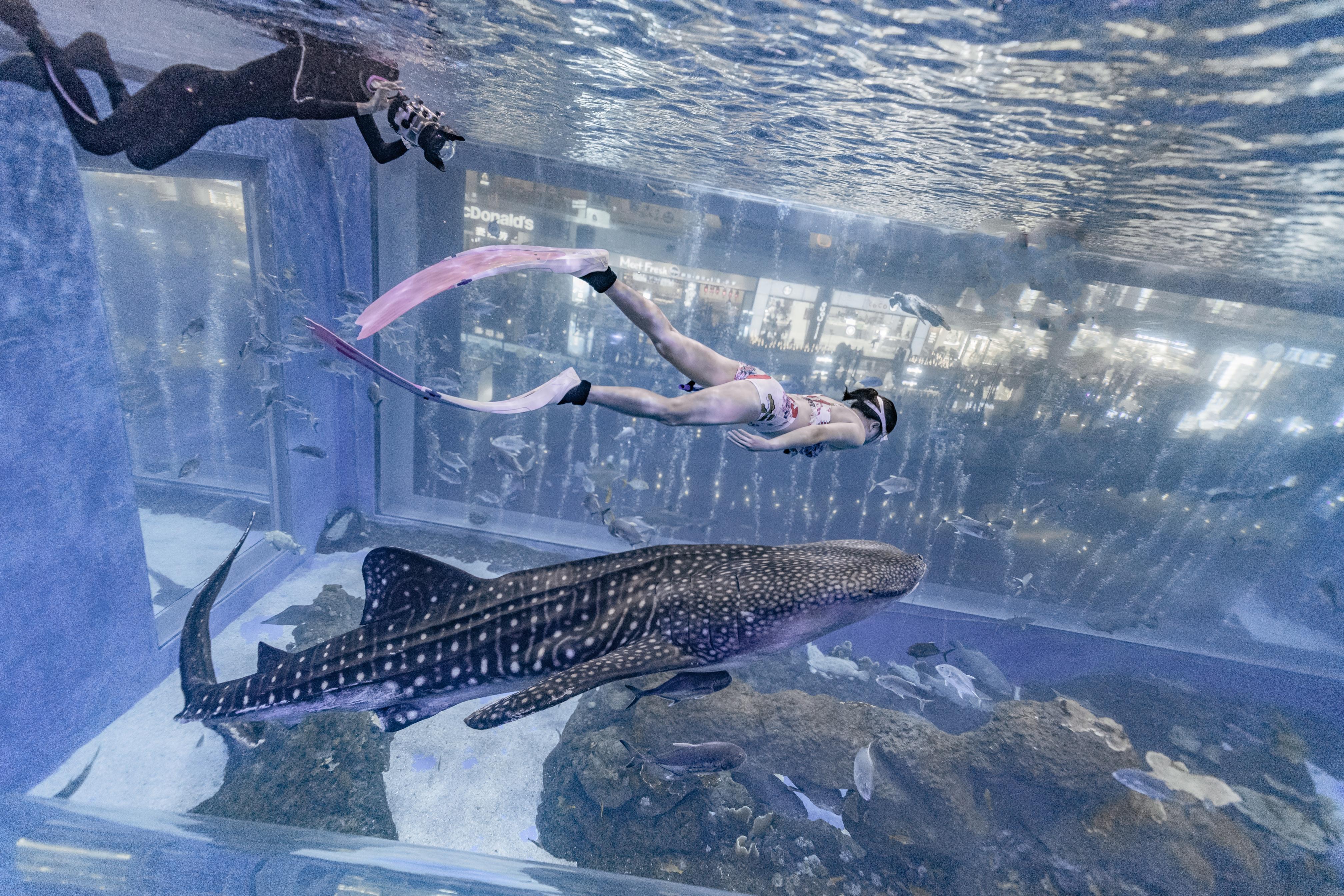 水族馆自由潜拍照