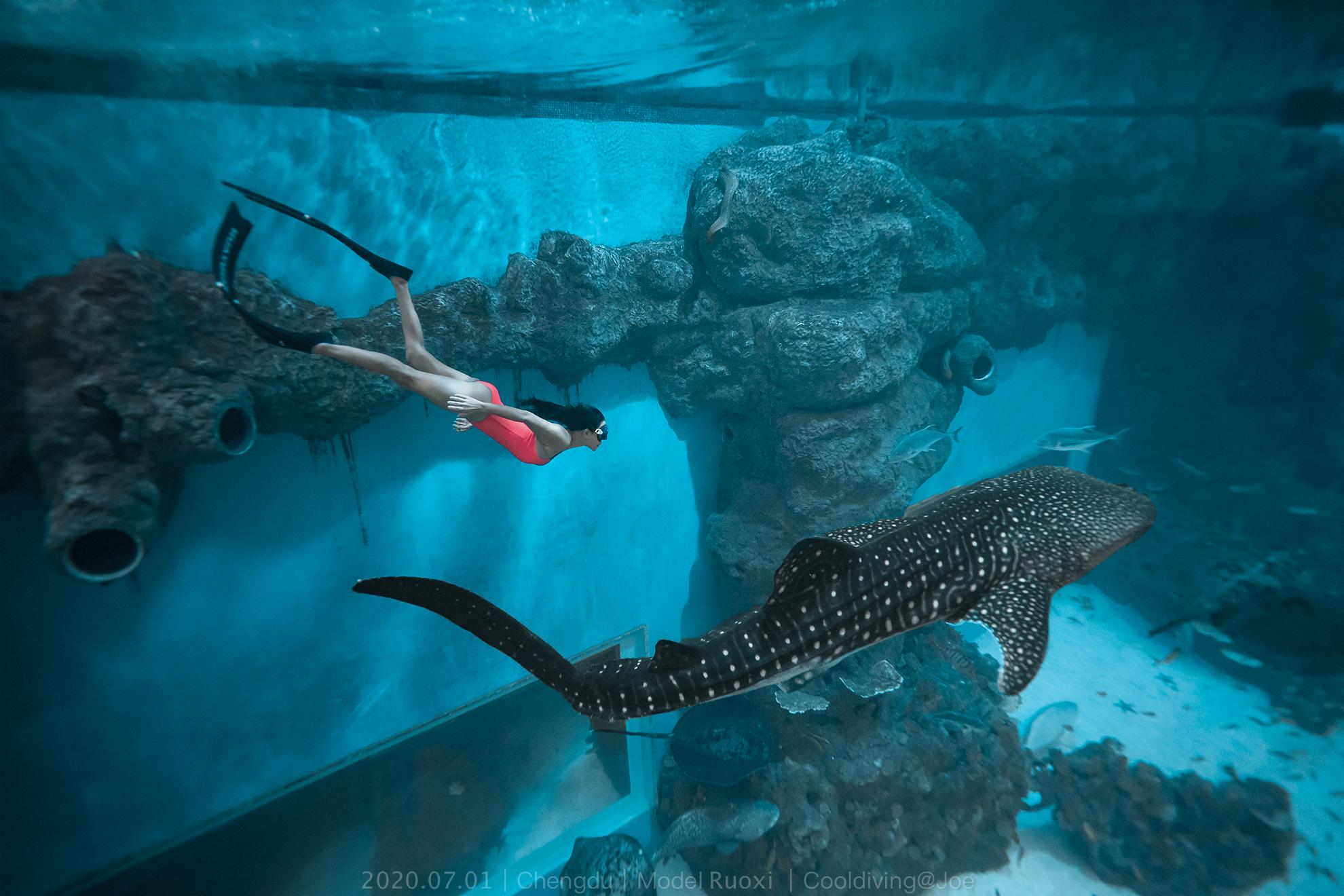 鲸鲨,鲨鱼,小姐姐,自由潜