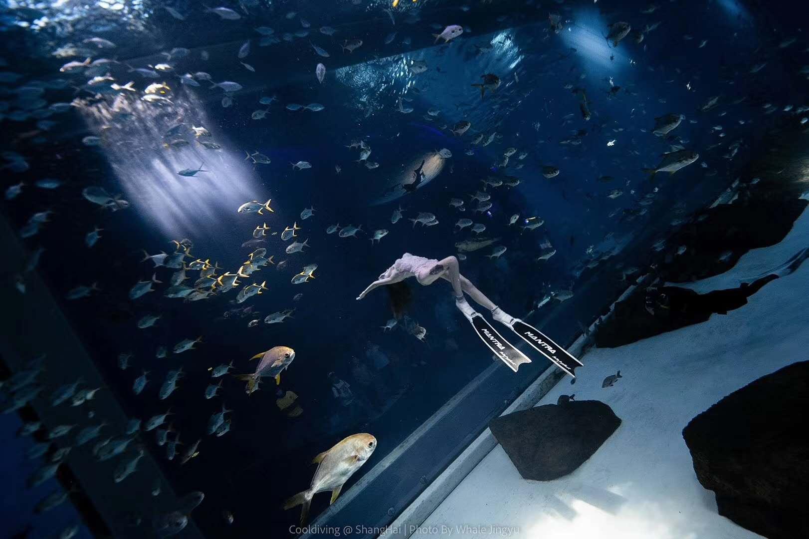 水族馆自由潜水练习